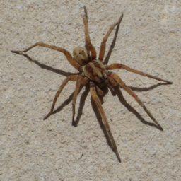 Уничтожение пауков в Ревде
